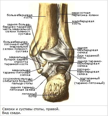 Пронационное повреждение голеностопного сустава лекарство для суставов коленей