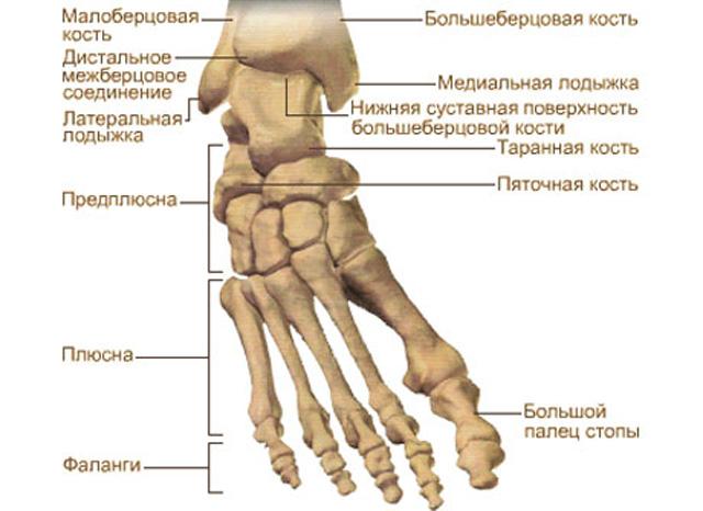 anatomicheskiy-atlas-kosti-i-ih-soedineniya-37423-large